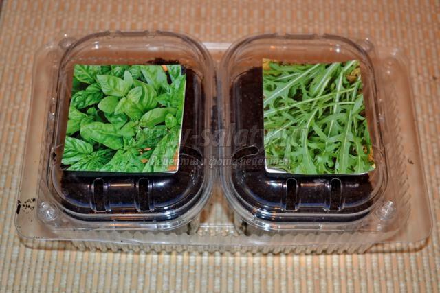 Руккола салат вырастить семена