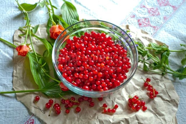 Рецепты желе из красной смородины на зиму