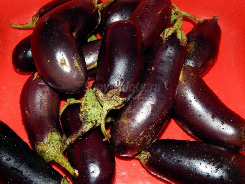 рецепт заготовки из баклажан