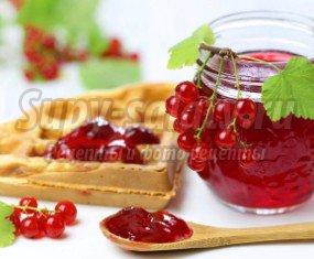 Желе из красной смородины на зиму: рецепты на зиму